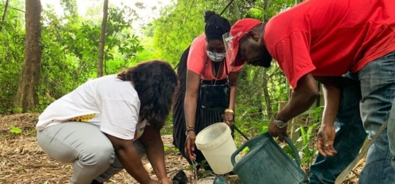 Planting trees for climate change, African Diaspora in Ghana to plant trees as Ghana goes green, BRAND ELMINA
